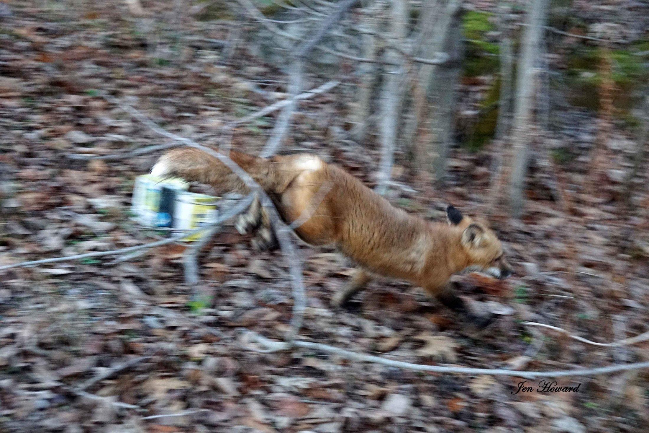 Meadow the Fox Goes Free - 5