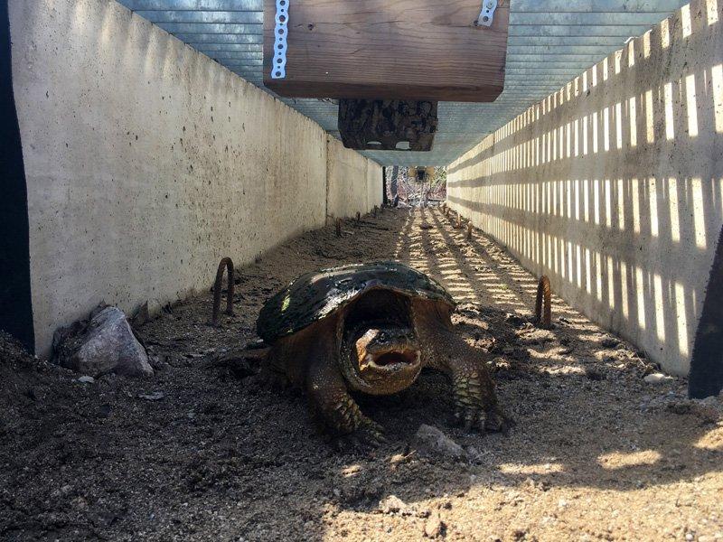 Bruce Peninsula National Park9 -Turtle