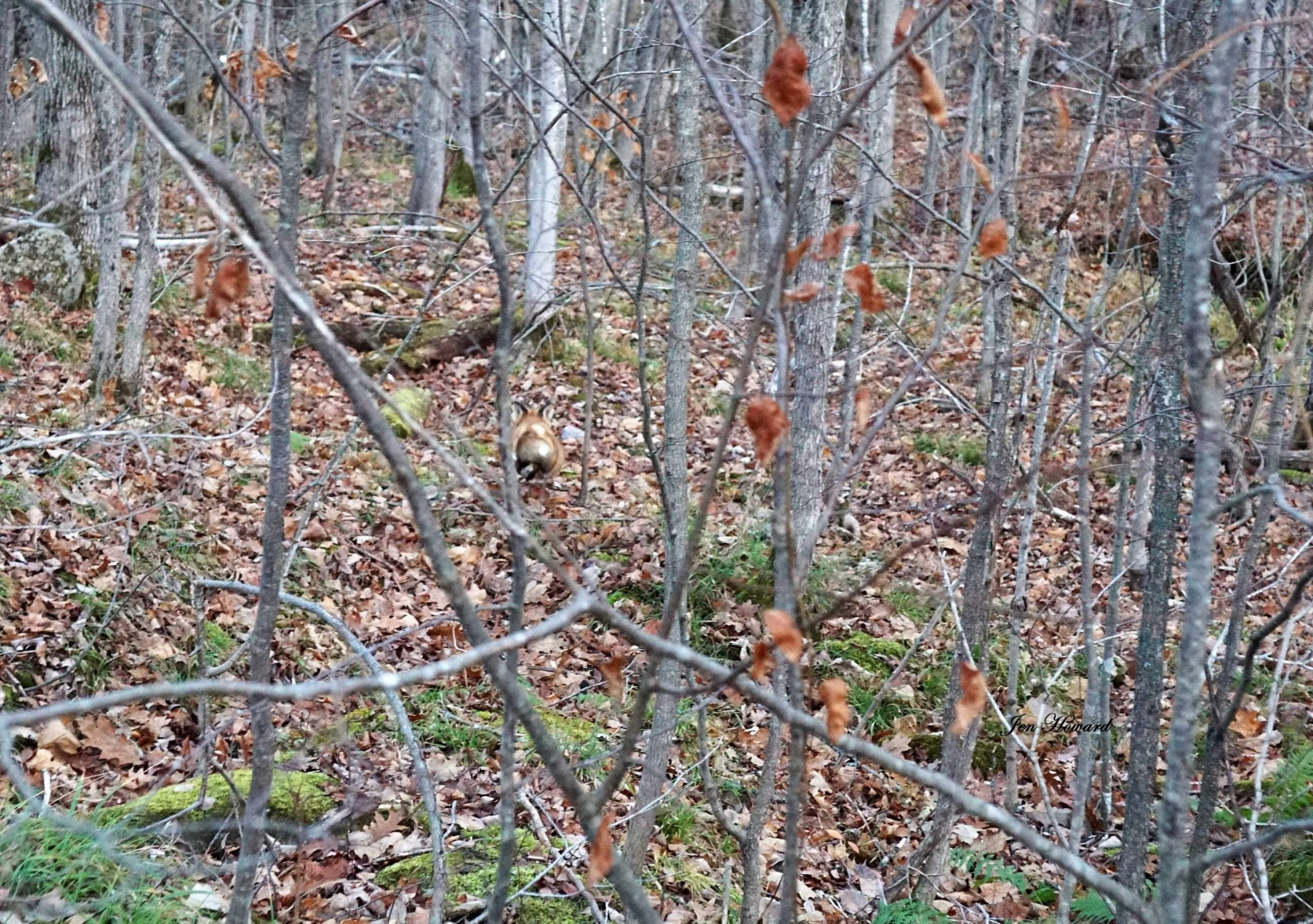 Meadow the Fox Goes Free - 11