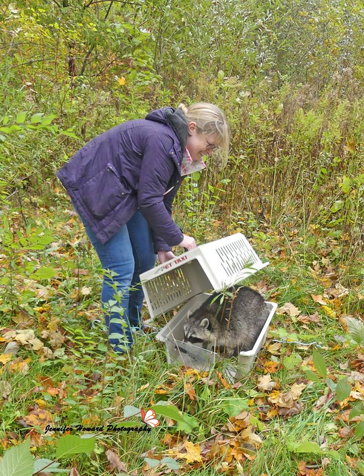 Rocky The Raccoon Released2