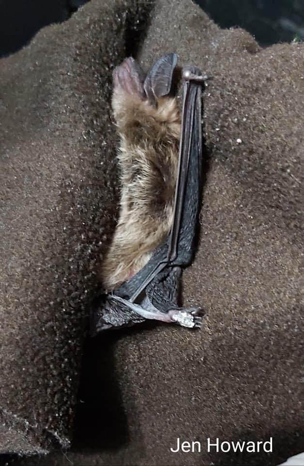 Bat With Tape Stuck 5