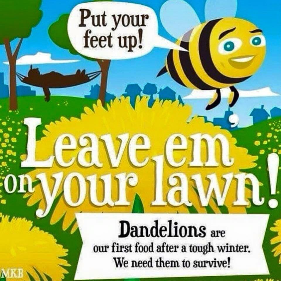 Bees Dandelions