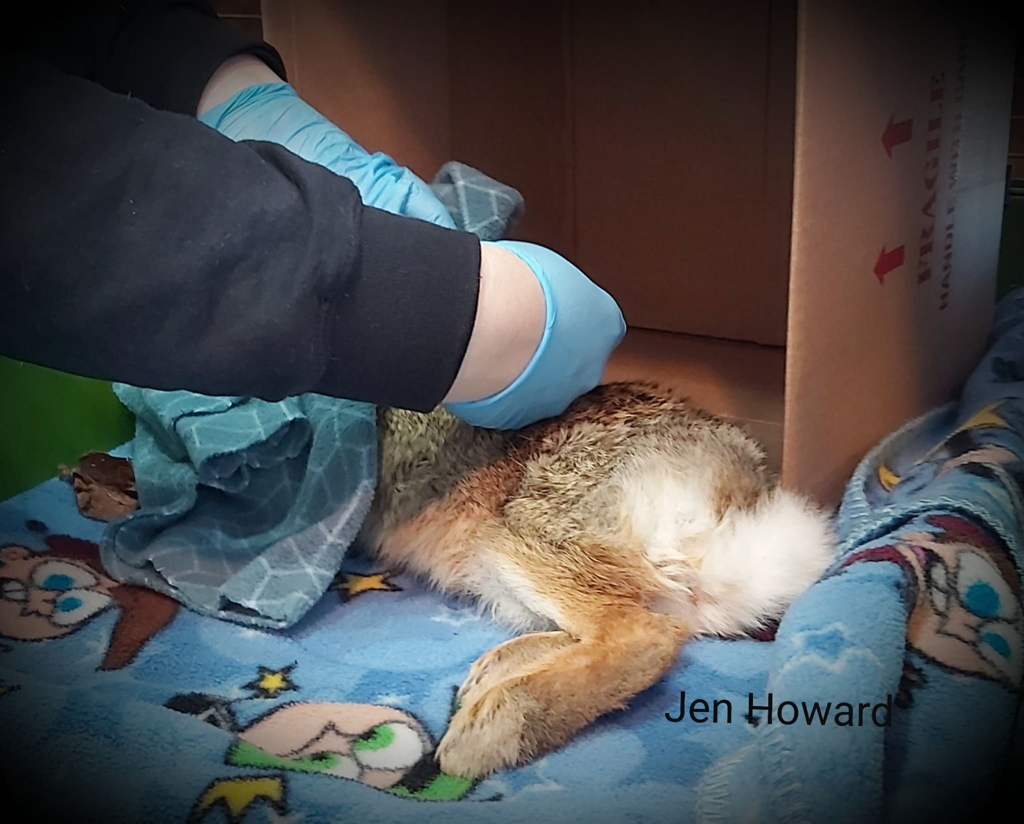 Bunny Being Cared For At Procyon