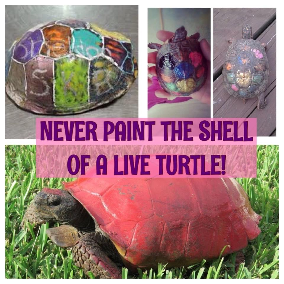 Never Paint A Turtle Shell