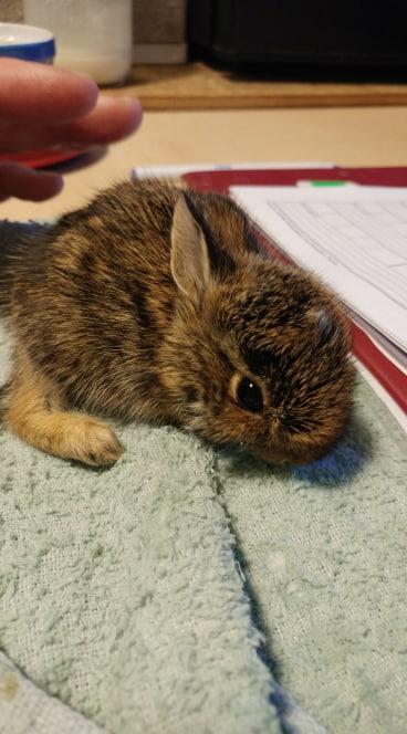 Rabbits (1)