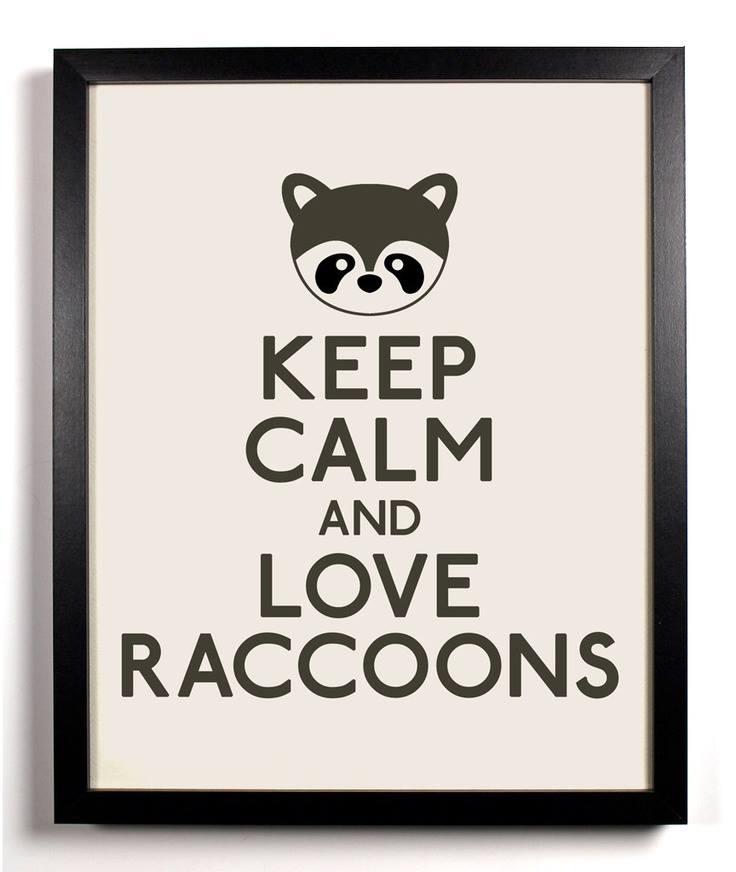 Raccooons