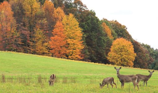 Wildlife Habitat by Ontario Ministry Of Natural Resources And Forestry