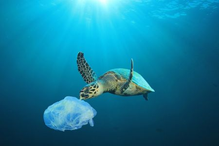 Florida sea turtle with plastic bag by Rich Carey.