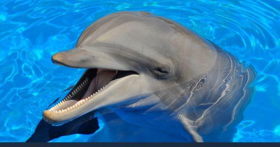 Dolphin's Teeth
