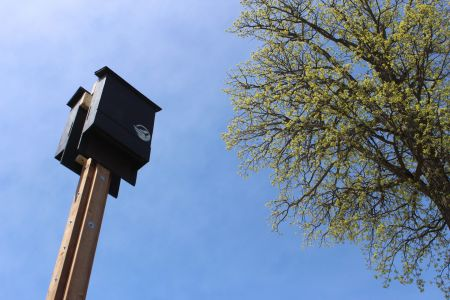 Putting up a Bat house by Canada Wildlife Federation