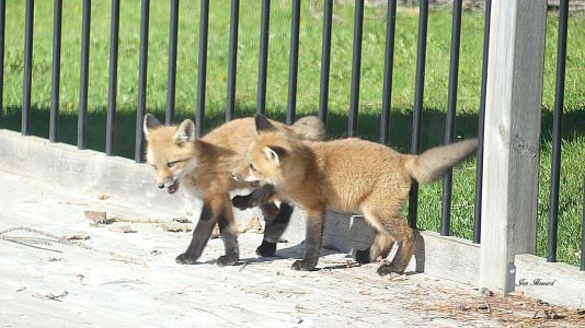 National Fox Is Sept 17 2021 (13)