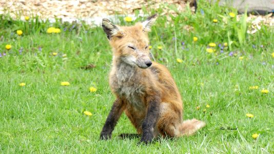 National Fox Is Sept 17 2021 (17)
