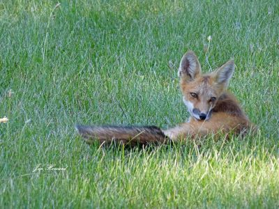 National Fox Is Sept 17 2021 (18)