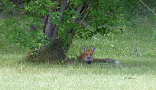 National Fox Is Sept 17 2021 (34)