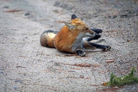 National Fox Is Sept 17 2021 (35)
