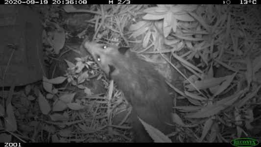 Adopt A Pond Toronto Zoo7 - Oppossum