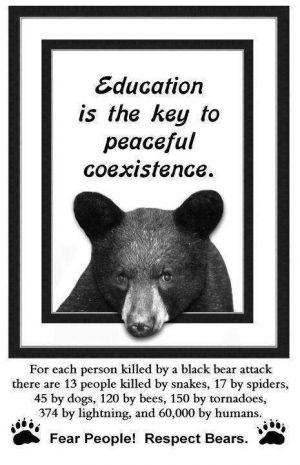 Bears Black