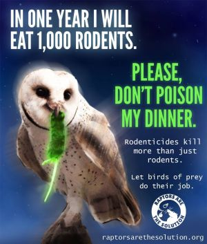 Birds - Owls Don't Poison My Dinner