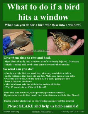 Birds Hit The Window