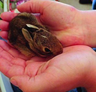 Bunny In Helping Hands