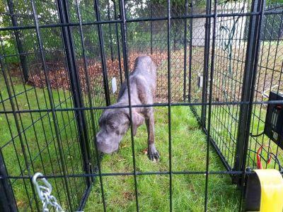 Dog Rescue 2