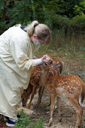 Fawns (10)
