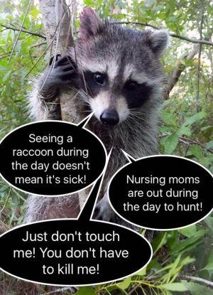 Raccoon Facts