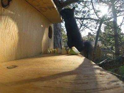 Squirrel Release