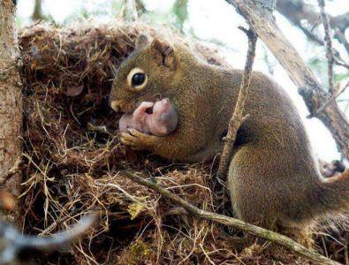 Squirrels 2