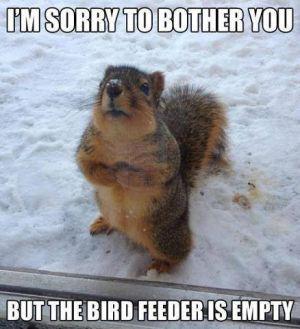 Squirrels 3