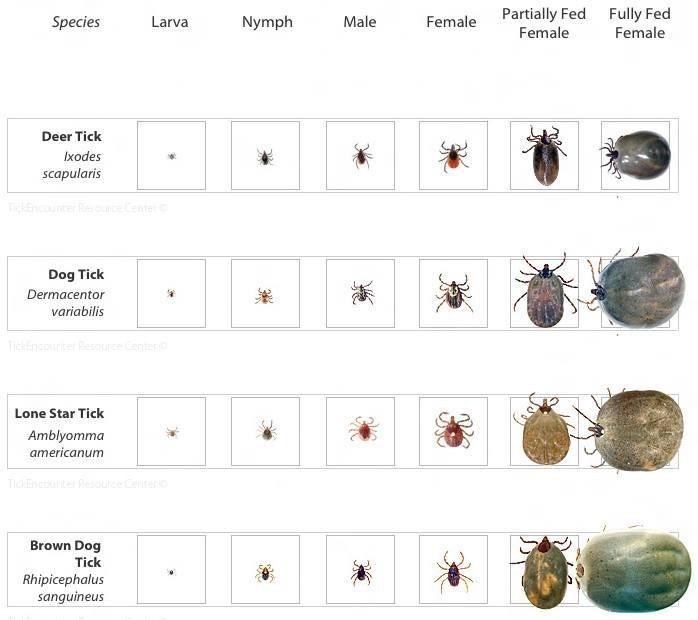 Ticks 2