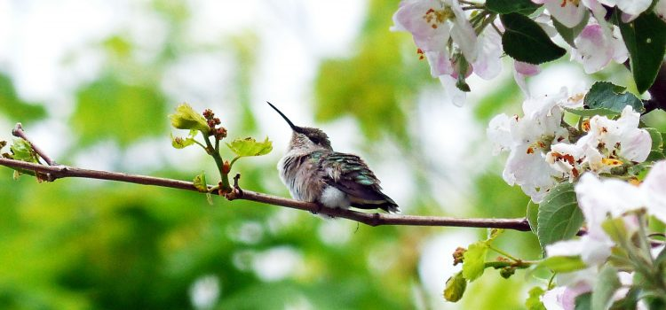 The Smallest Bird on Earth by Jennifer Howard