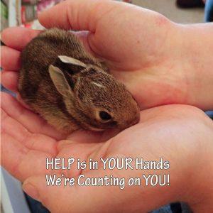 Cottontail Rabbits - sponsorship levels