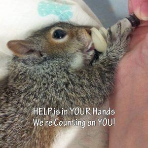 Squirrels - sponsorship levels