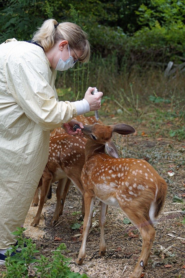 fawns (13)