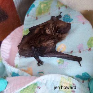 Bats - sponsorship levels