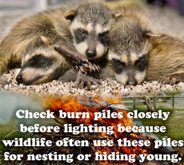 Please Check Burn Piles Closely Before Lighting!