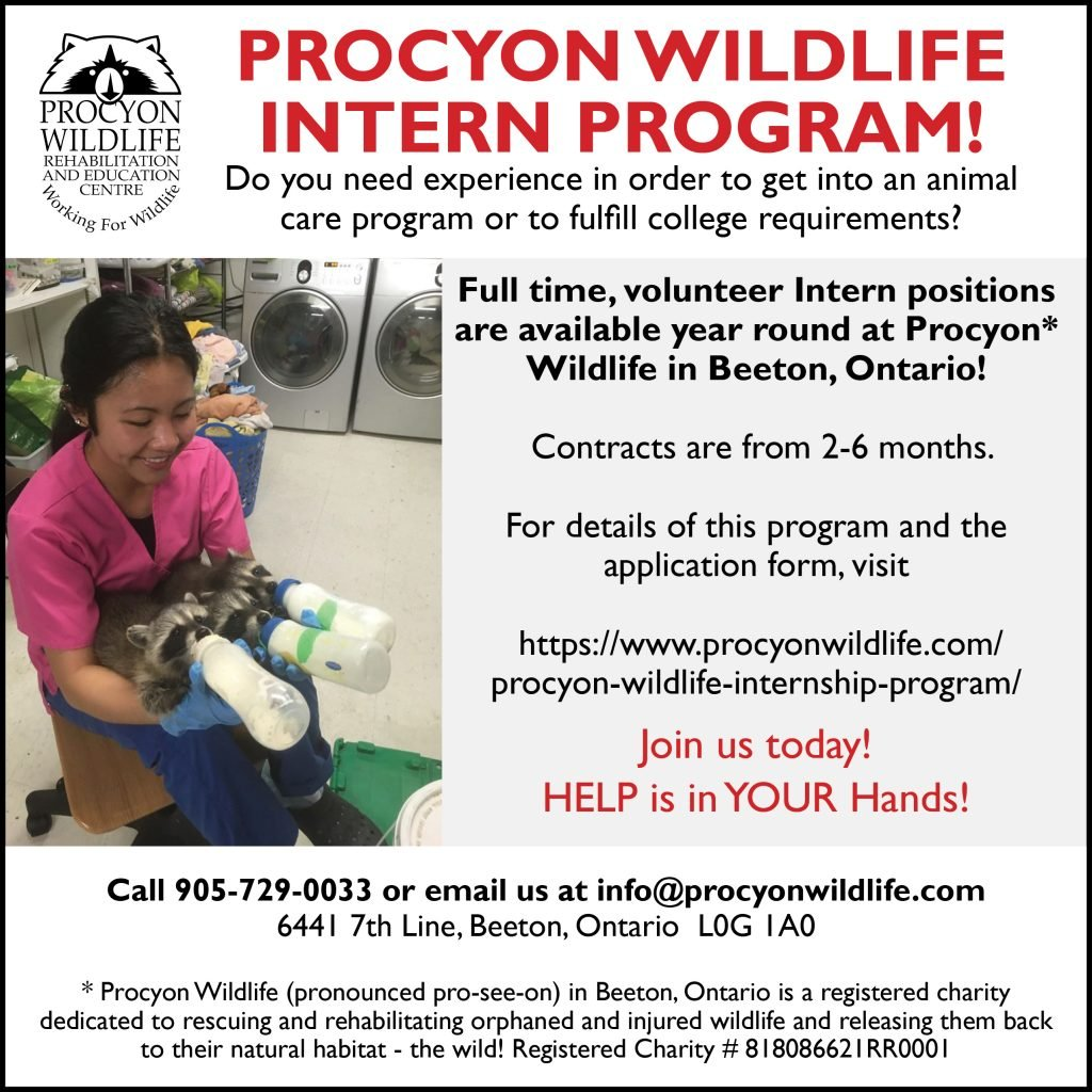Procyon Wildlife intern program 2020 DRAFT 1