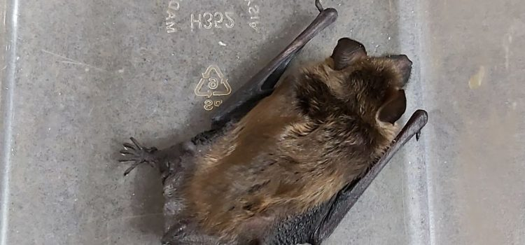 Bats – How to Safely Transport