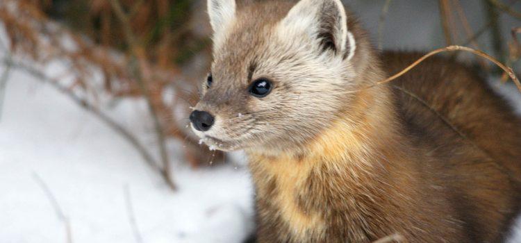 How Animals Cope in Winter