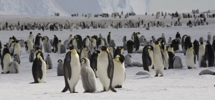 World Penguin Day is April 25th!
