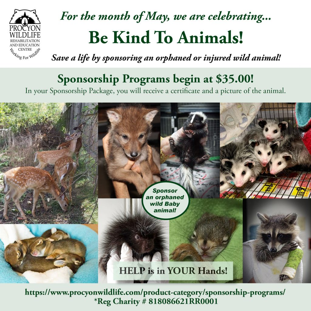 May is BE KIND TO ANIMALS MONTH