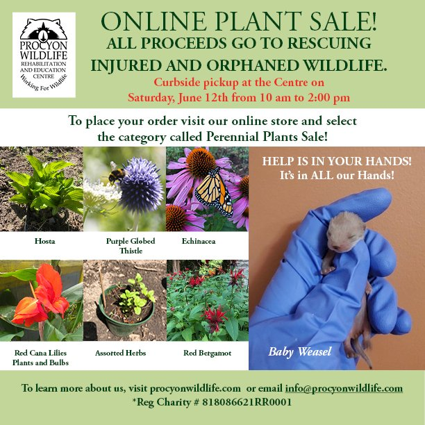 Perennial Plant Sale 06 12 2021