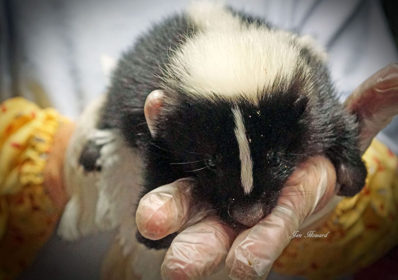 National Skunk Day is June 14th!