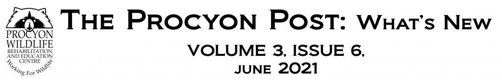 the procyon post june 2021