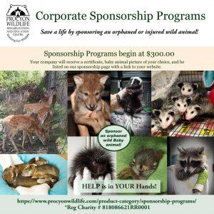 Corporate Sponsorship Programs