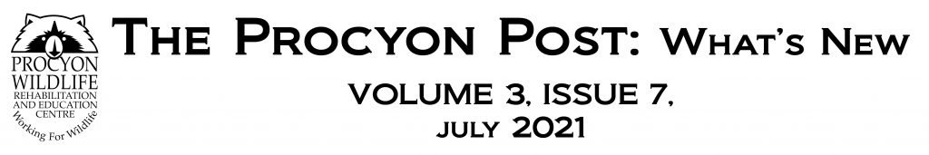 the procyon post july 2021