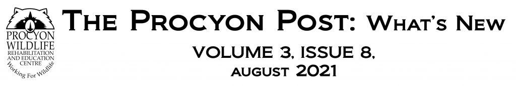 the procyon post august 2021