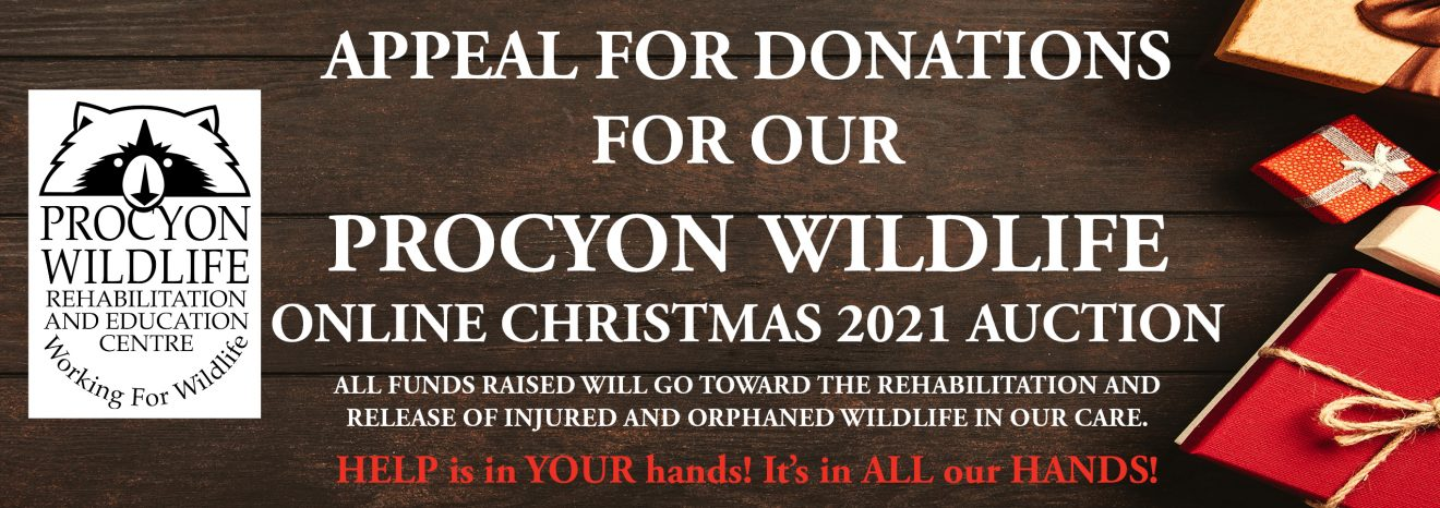 Online Procyon Wildlife Christmas Auction Appeal 2021 VER 3