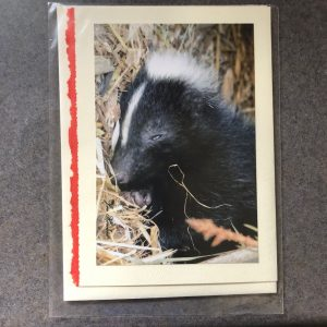 Animal Photo Greeting Cards by Jennifer Howard, sold singly